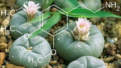 molécula peyote